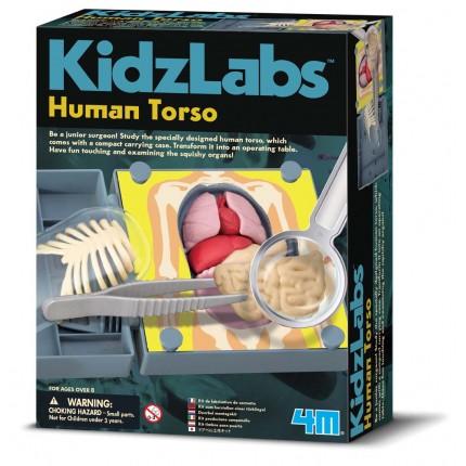4M-Kidz-Labs-Human-Torso-403373