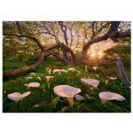 HEYE-Magic-Forests-29906-2