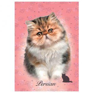 Puzzle de 100 peças com a imagem dum gato persa