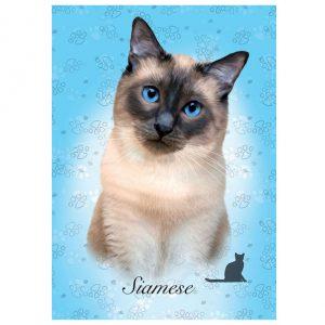 Puzzle de 100 peças com a imagem dum gato siamés